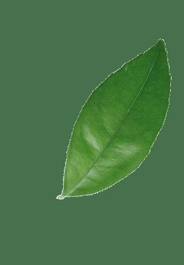 grüner Sonnenschutz