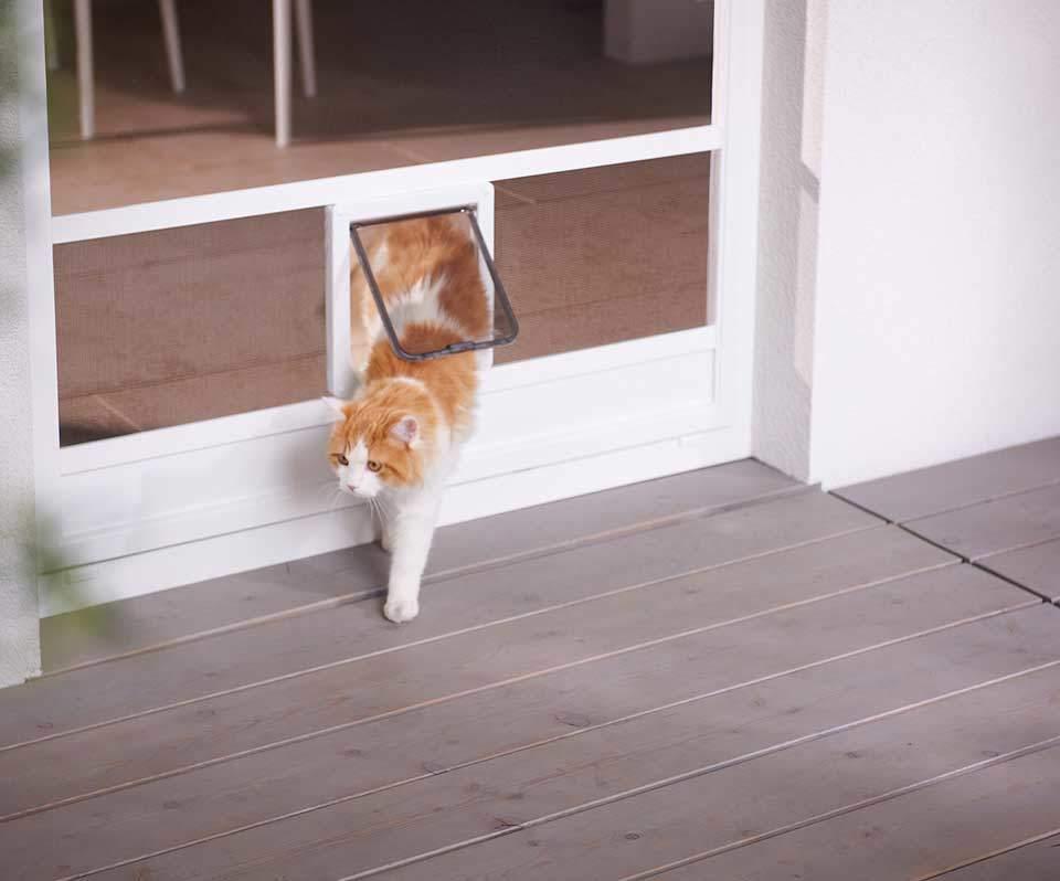 Insektenschutztür Katze